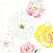 尾崎友直 3rdアルバム『メネ, メネ, テケル, ウ パルシン』LP+CD本日発売日です!