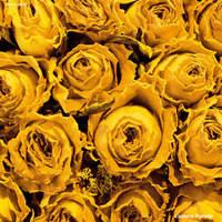 ランタンパレード 1stアルバムと2ndアルバムのアナログ盤が本日リリース!